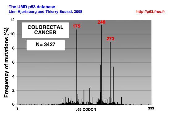 cancer colorectal p53)