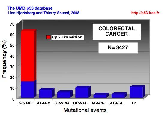 Semnificația prognostică a supraexprimării și mutației p53 în adenocarcinoamele colorectale