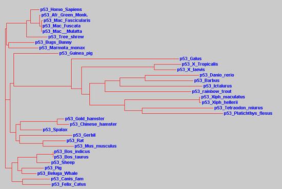 p53_evolution